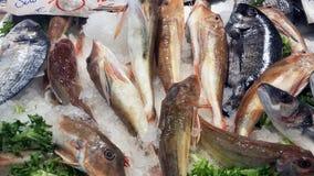 Grupp av den röda Gurnardfisken på marknaden royaltyfria bilder