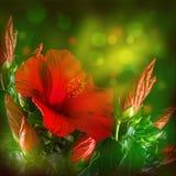 Grupp av den röda hibiskusblomman Arkivfoton