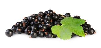 Grupp av den svarta vinbäret med bladet Arkivfoto