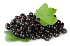 Grupp av den svarta vinbäret med två blad Arkivbilder