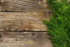 Grupp av dill på träbakgrund Arkivfoton