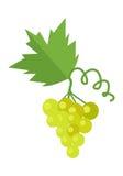 Grupp av druvan för vitt vin vektor illustrationer
