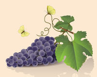 Grupp av druvor och fjärilar Stock Illustrationer