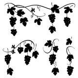 Grupp av druvor - uppsättning av svartvita vektorillustrationer royaltyfri illustrationer