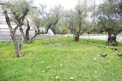 Grupp av duvor på den parkeraMiguel de Cervantes monumentet i plommoner Royaltyfria Foton