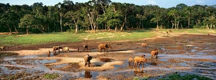 Grupp av elefanter arkivbilder