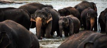 Grupp av elefanter royaltyfri bild