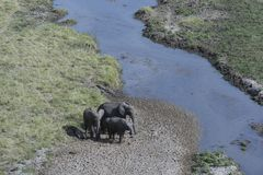 Grupp av elefanter som står på flodsäng Royaltyfri Bild