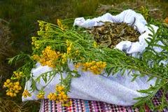 Grupp av en vanlig Tanacetumvulgare L för tansy lögner på en linne hänger löst med de torkade-upp medicinska grönsakråvarorna Royaltyfri Foto
