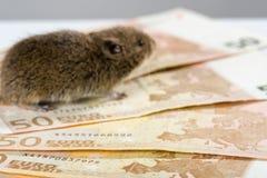 Grupp av 50 EUROsedlar med den suddiga musen i bakgrunden Arkivfoto