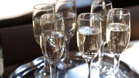 Grupp av exponeringsglas med att gristra champagne som skiner på solstrålar stock video