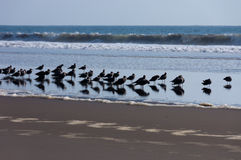 grupp av fåglar Royaltyfria Bilder