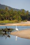 Grupp av fåglar på stranden av palominoen Royaltyfria Bilder