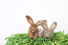 Grupp av Felted Wood kaniner eller kaniner på vit bakgrund Arkivfoton