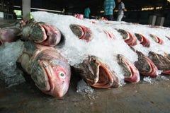 Grupp av fiskar som är klara att sälja en gro i fiskmarknad av Thailand Arkivbilder