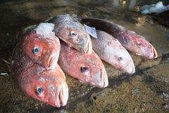 Grupp av fiskar som är klara att sälja en gro i fiskmarknad av Thailand Royaltyfri Fotografi