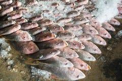 Grupp av fiskar som är klara att sälja en gro i fiskmarknad av Thailand Arkivfoto