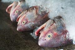 Grupp av fiskar som är klara att sälja en gro i fiskmarknad av Thailand Fotografering för Bildbyråer