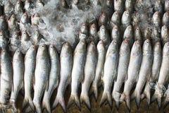 Grupp av fiskar som är klara att sälja en gro i fiskmarknad av Thailand Royaltyfri Bild