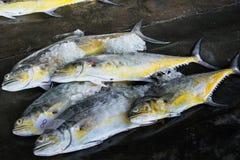 Grupp av fiskar som är klara att sälja en gro i fiskmarknad av Thailand Arkivbild