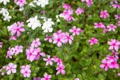 Grupp av flora Royaltyfria Bilder