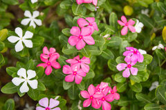 Grupp av flora Arkivfoton