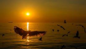 Grupp av flygseagulls Royaltyfria Bilder