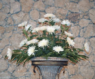 Grupp av fotoet för vita blommor Arkivfoto