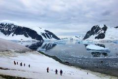 Grupp av fotvandrare med gentoopingvin omkring, antarktisk halvö Royaltyfria Foton
