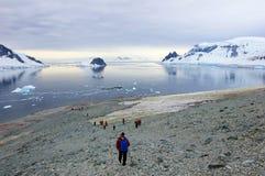 Grupp av fotvandrare med gentoopingvin omkring, antarktisk halvö Royaltyfri Bild
