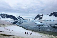 Grupp av fotvandrare med gentoopingvin omkring, antarktisk halvö Arkivfoton