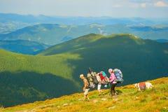 Grupp av fotvandrare på berg Royaltyfria Bilder