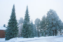 Grupp av frostiga träd Arkivbilder