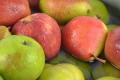 Grupp av fruite Fotografering för Bildbyråer