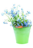 Grupp av glömma-mig-nots blommor Arkivfoto
