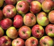 Grupp av gräsplan-röda äpplen Royaltyfri Foto