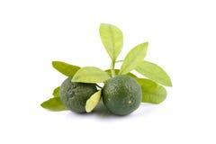 Grupp av grön calamansi och blad som används i stället för citronen som isoleras på vit bakgrund royaltyfri fotografi