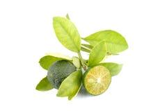 Grupp av grön calamansi och blad som används i stället för citronen som isoleras på vit bakgrund arkivfoto