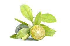 Grupp av grön calamondin och blad som används i stället för citronen som isoleras på vit bakgrund royaltyfri fotografi