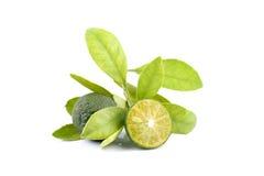 Grupp av grön calamondin och blad som används i stället för citronen som isoleras på vit bakgrund royaltyfri bild