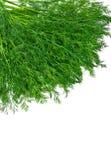 Grupp av grön dill Royaltyfri Foto