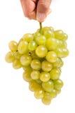 Grupp av gröna druvor i en hand som isoleras på vit bakgrund royaltyfri fotografi