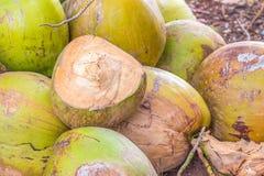 Grupp av gröna kokosnötter Royaltyfri Foto