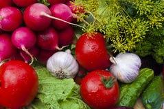 Grupp av grönsaker Royaltyfri Fotografi