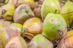 Grupp av gröna kokosnötter Arkivfoto