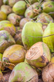 Grupp av gröna kokosnötter Arkivbild