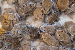 Grupp av grodor royaltyfri foto