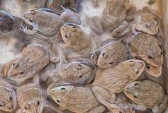 Grupp av grodor Royaltyfria Bilder