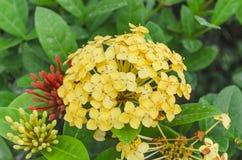 Grupp av gula blommor arkivbilder