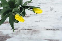 Grupp av gula tulpan på trätabellen Royaltyfri Foto